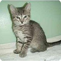 Adopt A Pet :: Shiloh - New Egypt, NJ