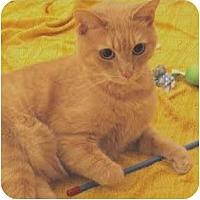 Adopt A Pet :: Bravo - Alexandria, VA
