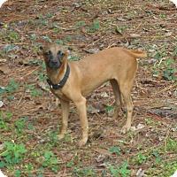 Adopt A Pet :: Lovebug - Ormond Beach, FL