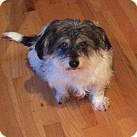 Adopt A Pet :: Stanley - North Bend, WA