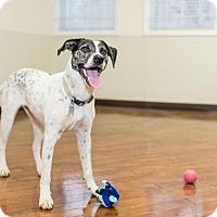 Adopt A Pet :: Pepper - Charlotte, NC