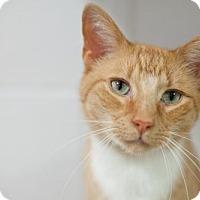 Adopt A Pet :: Cheddar - Stafford, VA