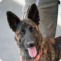 Adopt A Pet :: Foxy - Palmdale, CA