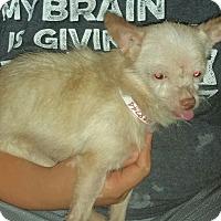 Adopt A Pet :: Waldo - Houston, TX