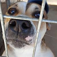 Adopt A Pet :: Lizzie Bell - Marianna, FL