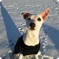 Adopt A Pet :: Jackpot Jr. - Whitestone, NY