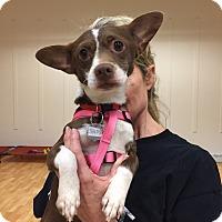Adopt A Pet :: Sammy - Valencia, CA