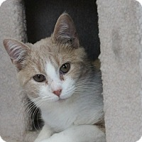 Adopt A Pet :: Holiday - Richand, NY