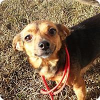 Adopt A Pet :: PUMPKIN - Portsmouth, NH