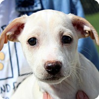 Adopt A Pet :: Gracie - Waco, TX