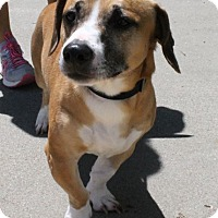 Adopt A Pet :: Charlie Corg - Winder, GA