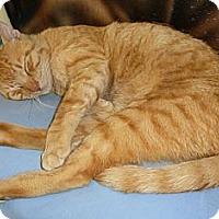 Adopt A Pet :: Big Yella - Lake Charles, LA