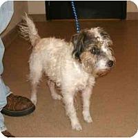 Adopt A Pet :: SuziePENDING - Toronto/Etobicoke/GTA, ON