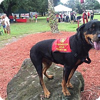 Adopt A Pet :: Buddy - Seffner, FL