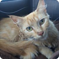 Adopt A Pet :: Hope - Clay, NY