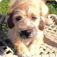 Adopt A Pet :: ! 4 Dana - Colton, CA