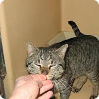 Adopt A Pet :: Pookie - Brooklyn, NY