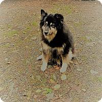 Adopt A Pet :: Phoebe - Bellingham, WA