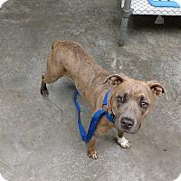 Adopt A Pet :: Hazel - Paducah, KY