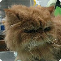 Adopt A Pet :: Garfield - DFW Metroplex, TX