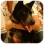 Photo 3 - Australian Cattle Dog Dog for adoption in Eagle Mountain, Utah - Josie