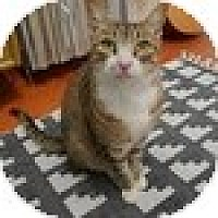 Adopt A Pet :: Elliot - Vancouver, BC