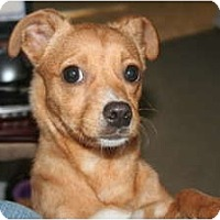 Adopt A Pet :: Tawni - Westfield, IN