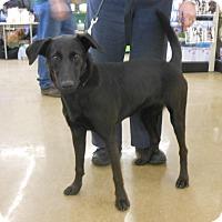 Adopt A Pet :: Cheyenne - Toledo, OH