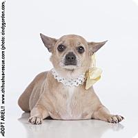 Adopt A Pet :: Ariel - Dallas, TX
