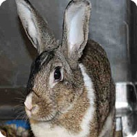 Other/Unknown for adoption in Chicago Ridge, Illinois - AUTUMN