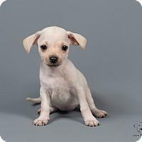 Adopt A Pet :: Birdie - Henderson, NV