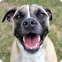 Adopt A Pet :: Kashmire - Michigan City, IN