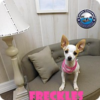 Adopt A Pet :: Freckles - Arcadia, FL