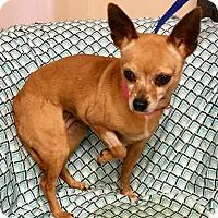 Adopt A Pet :: Lucille - Phoenix, AZ