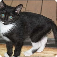 Adopt A Pet :: Tidbit - Port Republic, MD