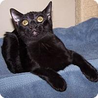 Adopt A Pet :: K-DelMar5-Condor - Colorado Springs, CO
