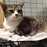 Adopt A Pet :: Bugs - Stafford, VA