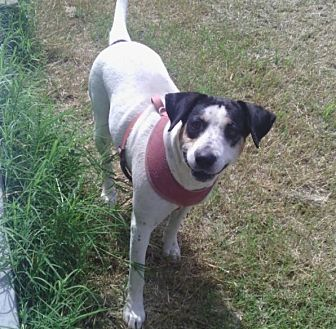 Hound (Unknown Type) Mix Dog for adoption in Shawnee, Oklahoma - Momma Dawn