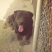 Adopt A Pet :: Boozer - Nuevo, CA
