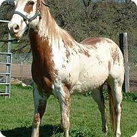 Adopt A Pet :: Hildalgo - El Dorado Hills, CA