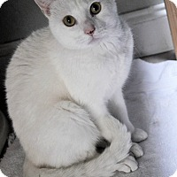 Adopt A Pet :: REGAL (low adoption fee) - New Smyrna Beach, FL