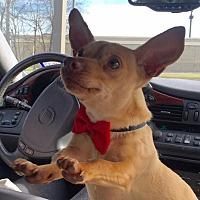 Adopt A Pet :: FoxTrot - Vidor, TX