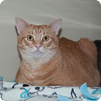 Adopt A Pet :: Otis - New Martinsville, WV