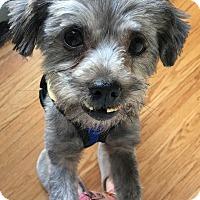 Adopt A Pet :: Smoochie - Bucks County, PA