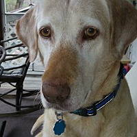 Adopt A Pet :: Cidney - Stahlstown, PA