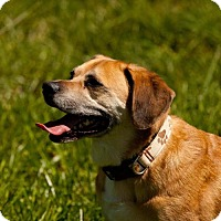 Adopt A Pet :: Sampson - Great Bend, KS