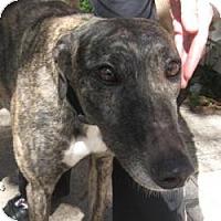 Adopt A Pet :: Driver - Canadensis, PA