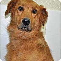 Adopt A Pet :: Crosby - Port Washington, NY