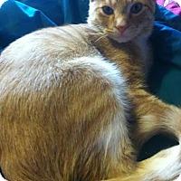 Adopt A Pet :: Milo - Eagan, MN