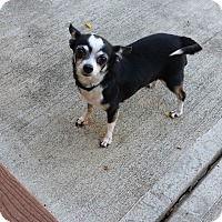 Adopt A Pet :: Ella - Dayton - Dayton, OH